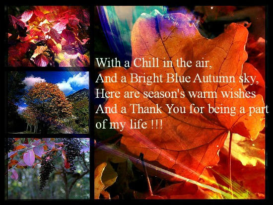 Thank You For A Wonderful Autumn..