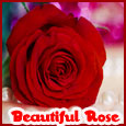 Beautiful Rose For A Beautiful Person.