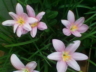 September Flowers.
