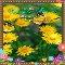 A Nice September Flowers Ecard.