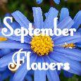 Achieve September Goals!