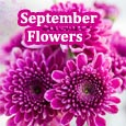 Colorful September Flowers!