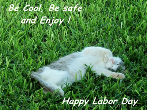 Labor Day Cat!