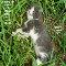 Labor Day Kitten.