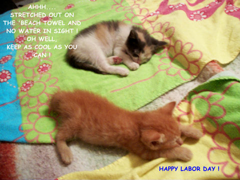 Labor Day Specials Kittens.