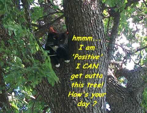 Positive Thinking Cat.