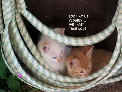True Love Kittens.