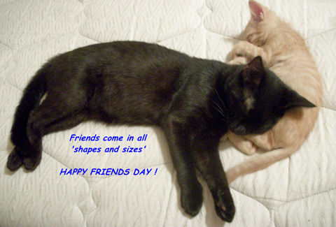 Friends' Day Cats.