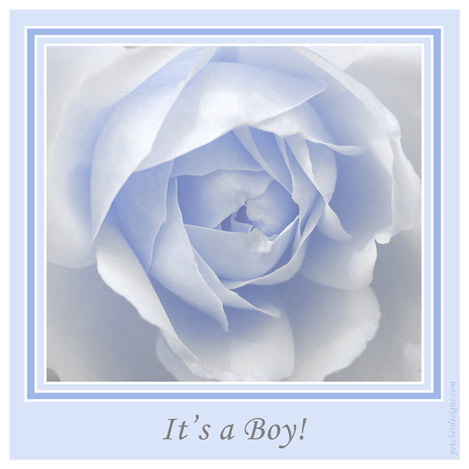 It's A Boy Rose.