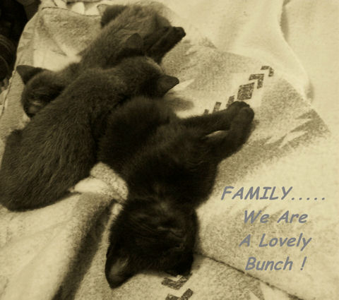 We Are Family Kittens.