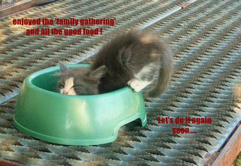Family Occasions Kitten!