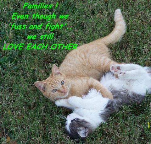 Family Cats.