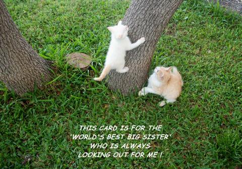 Sister Kitten Card.