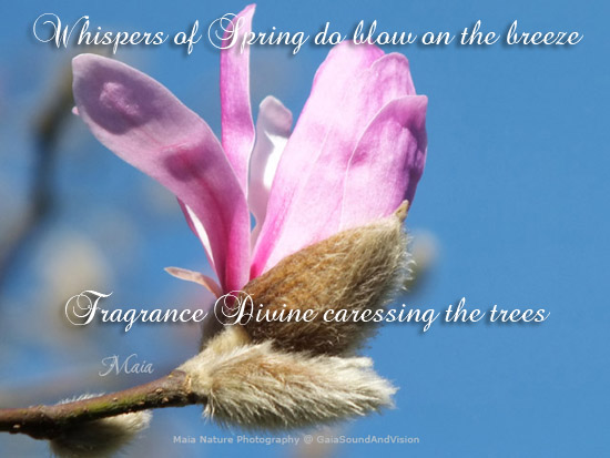 Fragrance Divine.