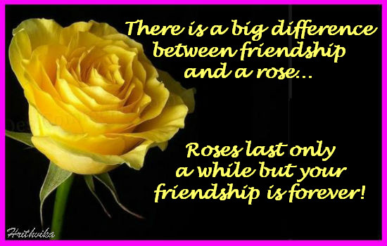 Difference Between Rose And A Friend!