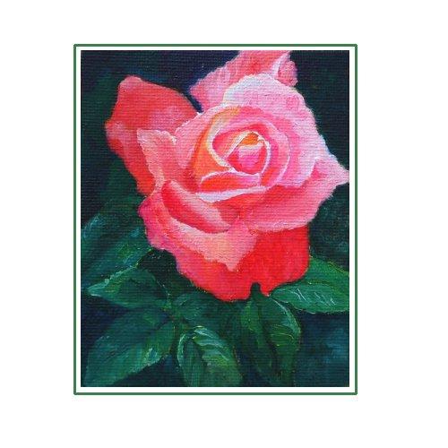 Deep Pink Rose.