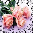 Home : Flowers : Roses - Roses For U!