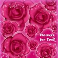Home : Flowers : Roses - Roses And Flowers For You...