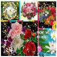 Home : Flowers : For Someone You Care - Beautiful Flowers For...