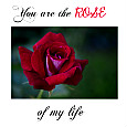 You Are The Rose Of My Life.