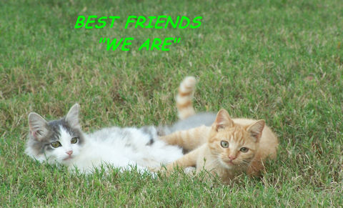 Best Friends Kitties.