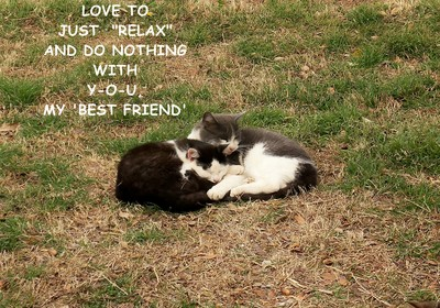 Best Friends Cats.