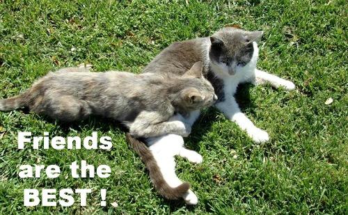 Best Cat Friends.