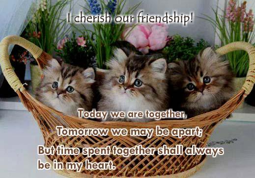 i cherish our friendship  free best friends ecards