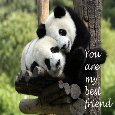 Friendship Wish.