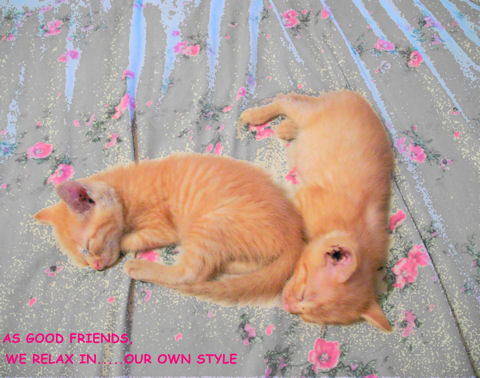 Forever Friends Kittens.