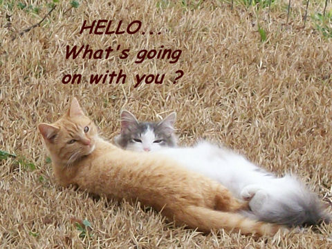 Friendship, Hello Cats!