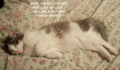 Friendship Caring Cat.