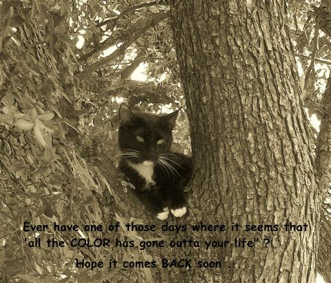 Caring Cat.