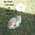 Between Us Friends Kittens.