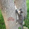 Hanging Around Friend Kitten.