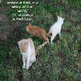 Friendship Kittens.
