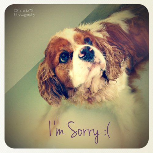 how to say im sorry to email