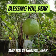 Blessing You Dear, Fruits.