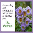 Home : Everyday Cards : Cheer Up - Uplift The Spirits Of Your Loved One