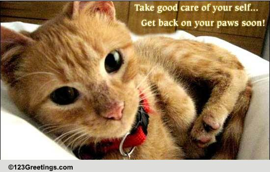Get Back On Your Paws Soon! Free Get Well Soon eCards ...