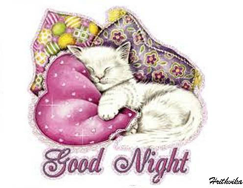Good Night Cat...