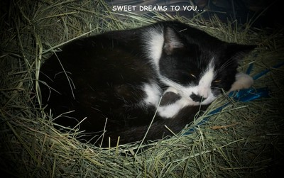 Sweet Dreams Kitty.
