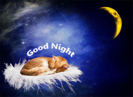 Cutie Good Night.