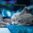 Sweet Dreams And Sleep Well...