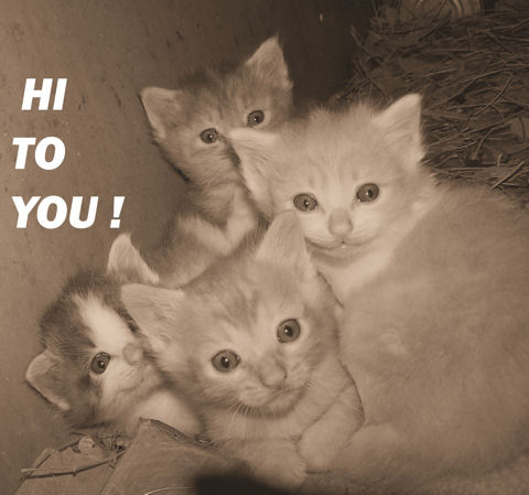 Hi! To You Kitties.