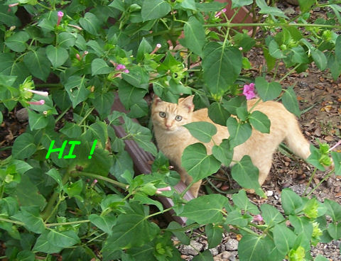 Kitty In Flowers Says, Hi!