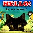 A Cute Hello Card For Someone.