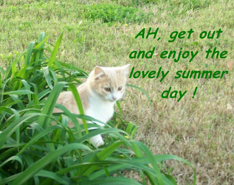 Great Summer Day Cat.