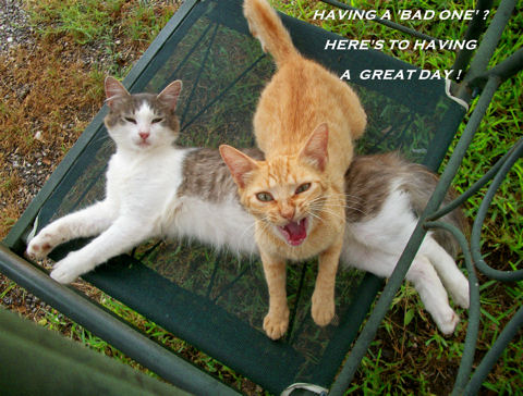 Everyday Great Day Cats.