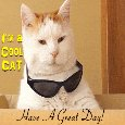 Cool Cat Has A Great Day.